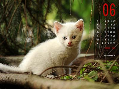 Macskás naptár