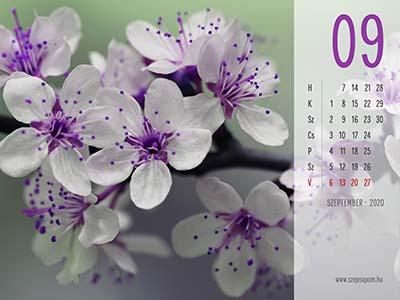 Virágos naptár