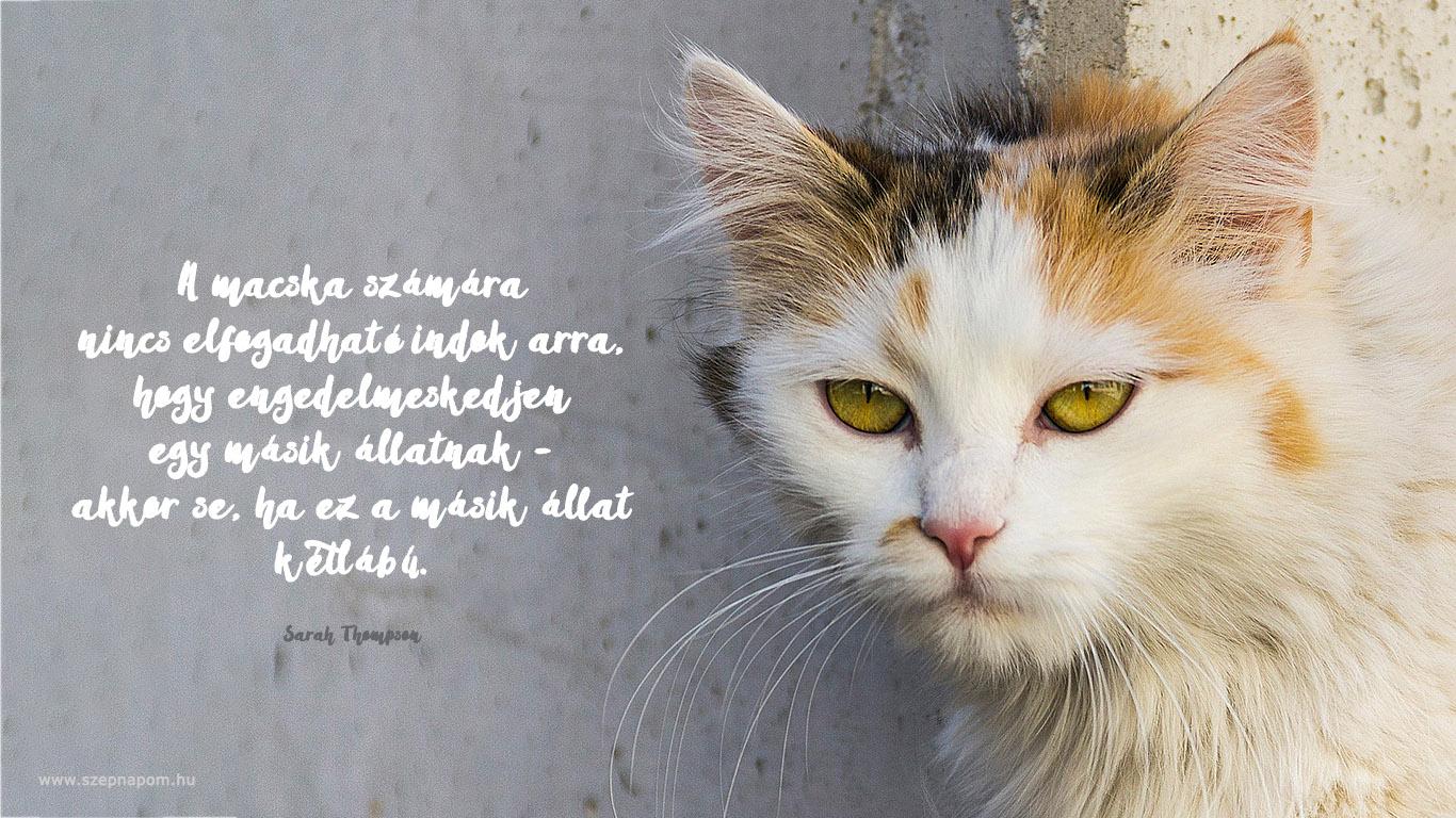 cicákról idézetek 12 macskás idézet | Macskacica